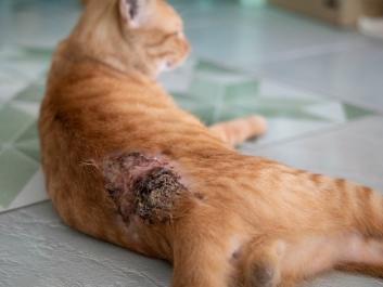 Katze mit Hautproblemen