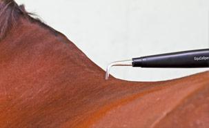 Treatment EquCellPen Horse
